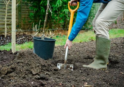 Подготовка ямы осенью для посадки яблони весной. Посадка саженцев яблонь: осень или весна?