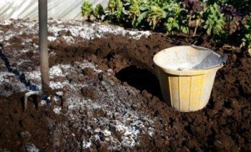 Как подготовить землю в теплице. Какие способы дезинфекции почвы существуют?