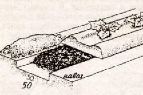 Подготовка почвы под огурцы в теплице осенью. Подготовка почвы, как залог богатого урожая огурцов