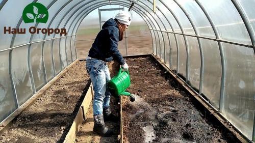 Обеззараживание почвы в теплице. Спасительная обработка почвы в теплице от болезней