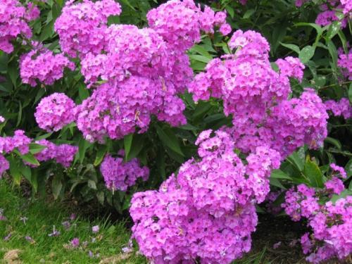 Как разместить цветы и кустарники у себя на участке. Как научиться красиво сажать цветы на даче