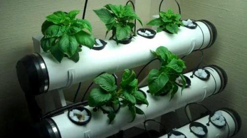 Выращивание клубники в подвале. Гидропонный метод выращивания